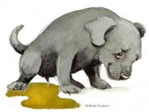 Diarrhoea in dogs